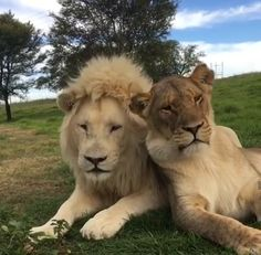 Small Wild Cats, Big Cats, Cats And Kittens, Animals And Pets, Baby Animals, Funny Animals, Cute Animals, Pumas, Lion Pictures