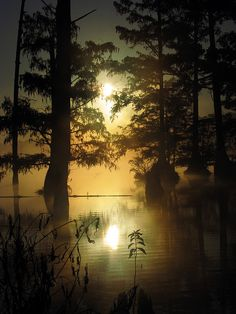 Amazingly quiet and serene.  Bluff Lake, Noxubee National Wildlife Refuge near Starkville, Mississippi