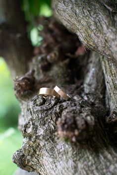 Jill  Brian's custom made wedding band set by Aide-mémoire Jewelry. His - 6x1.25mm flat band, 14k yellow gold. Hers - 4x1mm flat band, 14k yellow gold.   Photograph by Tacey Abney of Laughing Willow Photography | Aide-Mémoire Jewelry #wedding #jewelry #weddingrings #ecofriendly #handmade @memoirejewelry