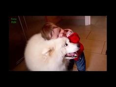 Funny Animals Video Clips - Funny Animals Hobe Videos [FUNNY ANIMALS HUMOR]  we have started making a long term goal with this channel and it is really dedicated to welfare activities for society dropped family and also a poor fund. Please subscribe our channel and help to others with us.  http://ift.tt/2cgHyms https://twitter.com/EnTerTainNCTB http://ift.tt/2bVHpBw [FUNNY ANIMALS HUMOR]  Keywords: funny animals compilation funny animals talking funny animals vines funny animals 2016 funny…