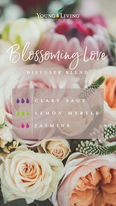 """Put the """"petal"""" to the metal by diffusing this fresh, floral blend called Blossoming Love. Instead of giving your love a bouquet of blooms, step up your romantic game with this aromatic treat featuring Clary Sage, Lemon Myrtle, and Jasmine essential oils! Yl Essential Oils, Essential Oil Diffuser Blends, Young Living Essential Oils, Myrtle Essential Oil, Clary Sage Essential Oil, Diffuser Recipes, Young Living Oils, Citronella, Jasmine"""