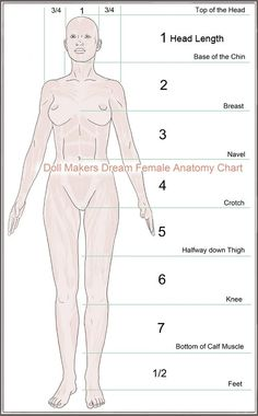 The female anatomy for artists