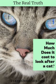The cost of owning a cat, How much does it cost to feed a cat, How much do cat toys cost? Discover everything you need to know about the price of cats and their care. #catcare #catvetcosts