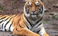 Tiger Stripes is a non-profit exotic animal sanctuary located just outside of historic Quitman, Ga. The facility is owned and operated by long-time animal trainer, Chris Kilpatrick and features a vari