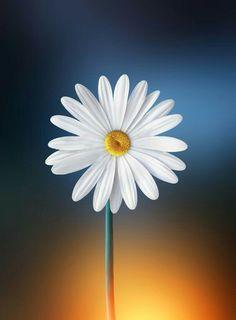 One single Daisy Wonderful Flowers, Happy Flowers, My Flower, White Flowers, Beautiful Flowers, Anemone Flower, Single Flowers, Colorful Flowers, Sunflowers And Daisies