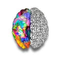 Neurociencia: ¿con qué parte del cerebro respondes a la vida? | eHow en Español