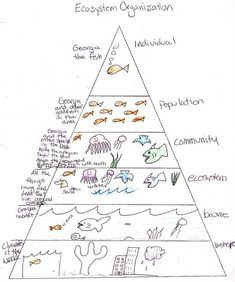 Ecosystem Pyramid student work (my science box)