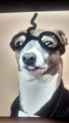 kermit jenna marbles dog