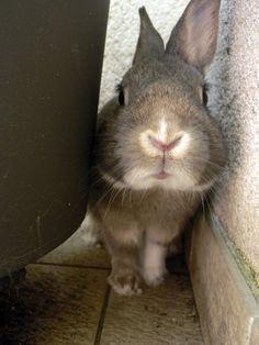 La dure vie du lapin urbain: Chaud devant !