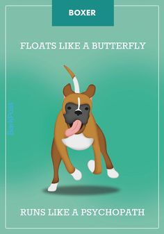 """Yes, we understand that all dogs are individualsand they don't always act like their breed """"stereotype,"""" but, well, we're just going to leave these here. Copyby Zoe Costello, Katie Haller, Tiffany White, Will Storie, Katie Kiernan, and Jonathan Graziano; illustrations byLaura Palumbo Comments #BoxerDog"""