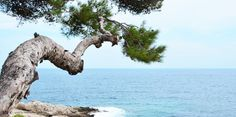 Fantastic Cap d'Ail, French Riviera, France  More on #MNBlog: http://novozhilovam.weebly.com/blog-hidden/084-fantastic-cap-dail   #travel #capail #frenchrivira #france #monaco #gracekelly #pine #pinetree #sea #landscape #summer #wave #travelblog #travelblogger #travelblogging #travelspectacular #luxurytravel #travelphotography