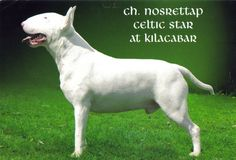 8. Something from my bucket list - Breed a Champion Bull Terrier! #bareMinerals #READYtowin