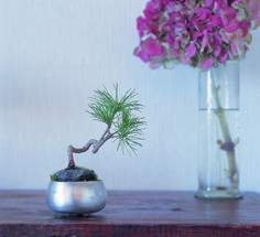 How to create your own miniature landscape.  #GardenIndoors