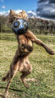 Goalie skills