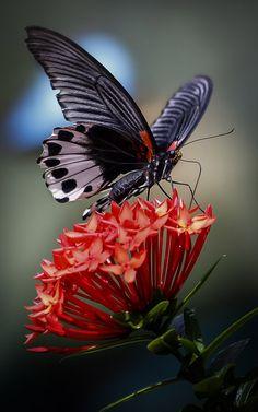 Butterfly Feeding on Flowers by  Ward on 500px