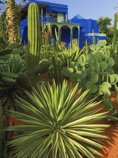 The Majorelle Garden is a twelve-acre botanical garden and artist's landscape garden in Marrakech, Morocco. Landscape Design, Garden Design, Marrakech Morocco, Morocco Travel, Desert Plants, Cactus Y Suculentas, Moorish, Cacti And Succulents, Botanical Gardens