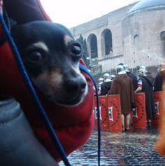 Mum, why are we watching Rome's Birthday Parade in the rain???