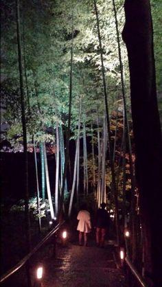 KODAIJI Gaeden night view