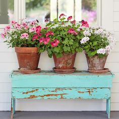 Best tips for how to care geraniums in winter to stay beautiful Geraniums in winter need special care because these flowers come in rest until next spring. Geraniums are spectacular flowers that bl… Fall Planters, Planter Pots, Beautiful Roses, Beautiful Gardens, Martha Washington Geranium, Vibeke Design, Flower Landscape, Landscape Design, Garden Design