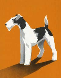 Image Detail for - Wire Fox Terrier