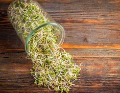 Sprossen im Glas-Vitaminbomben selbst züchten Vitamin bombs & Rearing sprouts in glass vitamin bombs themselves The post Grow sprouts in glass vitamin bombs yourself appeared first on Leanna Toothaker. Kefir Benefits, Kefir Recipes, Growing Microgreens, Water Kefir, Kraut, Sprouts, Most Beautiful Pictures, About Me Blog, Make It Yourself