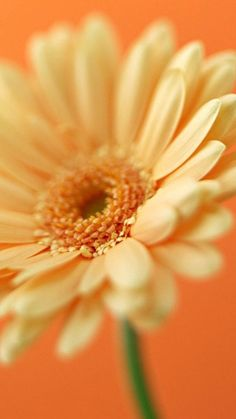 Daisy. Collection of Flowers iPhone Wallpapers - @mobile9 #nature #flowers #photography