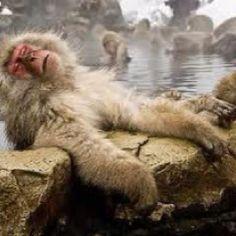 Monkey in Japan's onsen :-)
