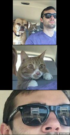 Funny Cat Memes 813814595147467432 - Just hang tight guys I know what I'm doing Source by matthieugrondin Really Funny Memes, Crazy Funny Memes, Funny Animal Memes, Stupid Memes, Cute Funny Animals, Funny Relatable Memes, Cat Memes, Funny Jokes, Hilarious