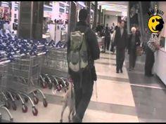 Bevásárló központban vakvezető kutyával és nélküle...