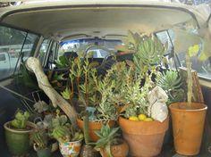 traveling plants