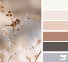 creature color image via: Julie Audet You are in the right place about wedding color palette blush Here we offer you the most beautiful pictures about th Design Seeds, Colour Schemes, Color Combos, Color Balance, Balance Design, Neutral Colour Palette, Color Swatches, Colour Images, House Colors
