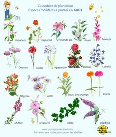 Types Of Flowers - Flowers Earth School, Youtube Banner Backgrounds, Bee On Flower, Garden Types, Plantation, Types Of Flowers, Permaculture, Flower Tattoos, Horticulture