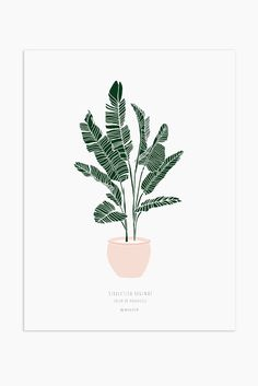 *** Discount Price When Buying Print and Hanger *** Hand sketched & digitally colored original illustration.Print on high quality paper, with smooth texture. Plant Illustration, Botanical Illustration, Watercolor Illustration, Watercolor Art, Foto Top, Plant Drawing, Guache, Gouache Painting, Floral Illustrations