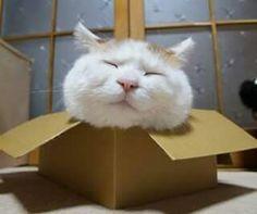 Shiro in a box?
