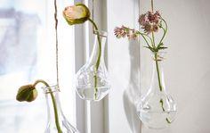 5 formas acessíveis de decorar com plantas
