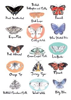 British butterflies and moths illustrated by Emma Block (via Etsy).