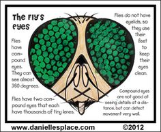 The Fly's Eyes - Compound Eyes Bubble Wrap Activity Sheet from www.daniellesplace.com