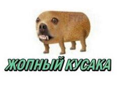Stupid Memes, Dankest Memes, Reaction Pictures, Funny Pictures, Hello Memes, Russian Memes, Cute Love Memes, Disney Phone Wallpaper, Lol League Of Legends