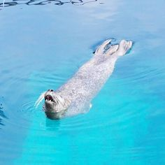 Los lunes al sol. Valencia Spain, Polar Bear, Whale, Instagram Posts, Nature, Blue, Animals, Animales, Naturaleza