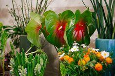 Freunde-von-Freunden-Carol-Montpart-Plant-Journal_MG_3493