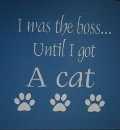 So true lol www.online Tellement vrai lol www. Cat Quotes, Animal Quotes, Lovers Quotes, Crazy Cat Lady, Crazy Cats, Beautiful Cats, Animals Beautiful, Gatos Cats, Cat Signs