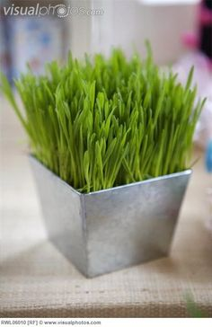 Grass boxes