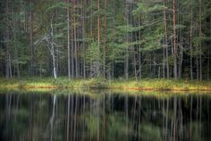 https://flic.kr/p/aqvnGs   Lomtjärnen / the Loon Tarn, Stora Envätterns naturreservat   A small tarn in the middle of pine that are several hundred years old.