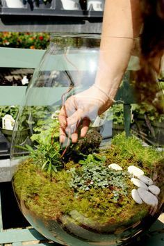 Terrarium inspiration: Moss, stones, a few small plants. Use tall hurricane vase but build terrarium at an angle like a hillside :)