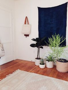 Indoor plants at entrance My New Room, My Room, Plantas Indoor, Indigo Walls, Deco Zen, Image Deco, Home Decoracion, Interior And Exterior, Interior Design