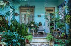 A common sight in Havana's neighborhoods, especially those of Vedado and Miramar: saturated paint colors almost obscured by overflowing tropical leaves, ceramic tile floors softened by thousands of footsteps.