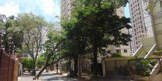 Forte ventania derruba árvore e parte do Cambuí fica sem energia   Agência Social de Notícias
