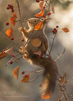 between shiny leafs by geertweggen via http://ift.tt/2gMy0kr