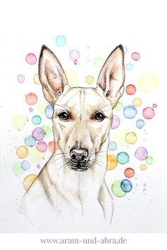 Zeichnung von Podenco nach Foto, Windhund, Aquarell, Hund, Kunst, Illustration, Aram und Abra, Hundeblog, www.aram-und-abra.de