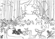 Does and Fawns in the forestFrom the gallery : AnimalsArtist : Marion C